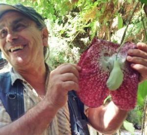 Le erbe medicinali di Aldo bongiovanni