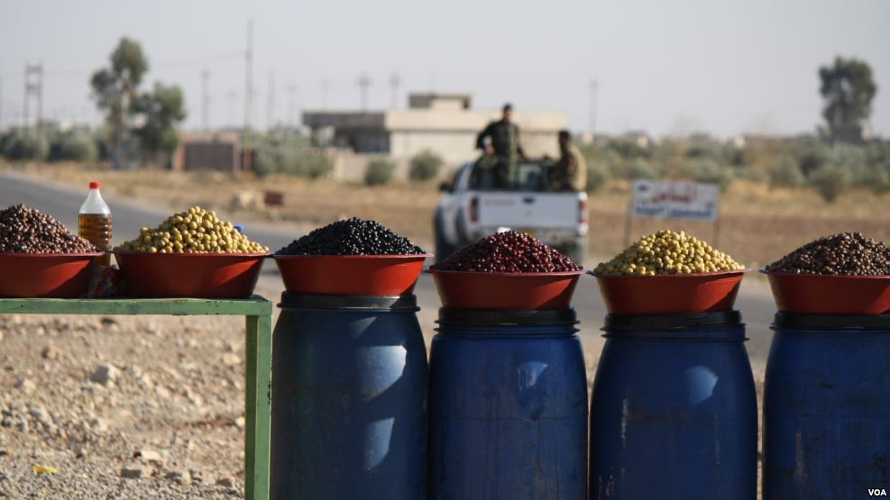 olio extravergine oliva biologico prezzi