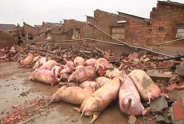 Terremoto in Emilia Romagna colpiti anche gli animali