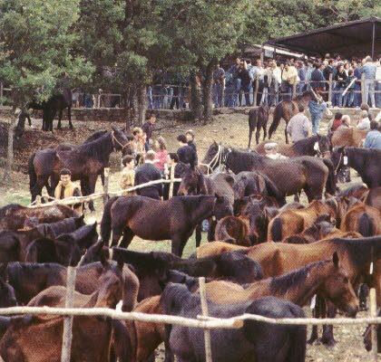 Cavallo San Fratellano