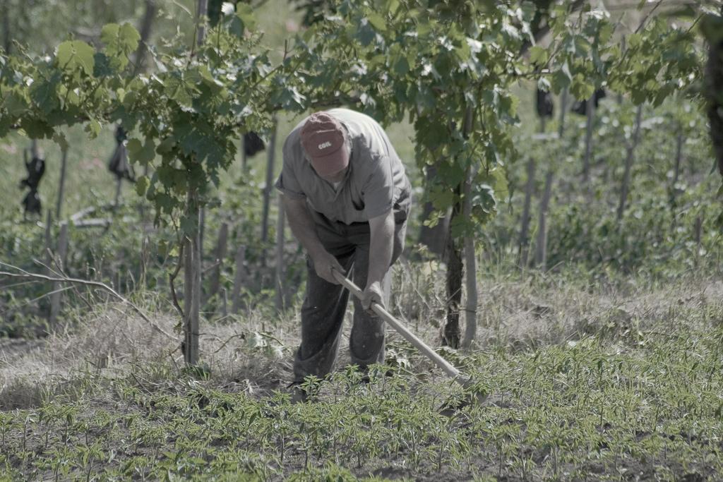 Imu agricola, esenti i coltivatori e gli imprenditori già in pensione - ECOMULO